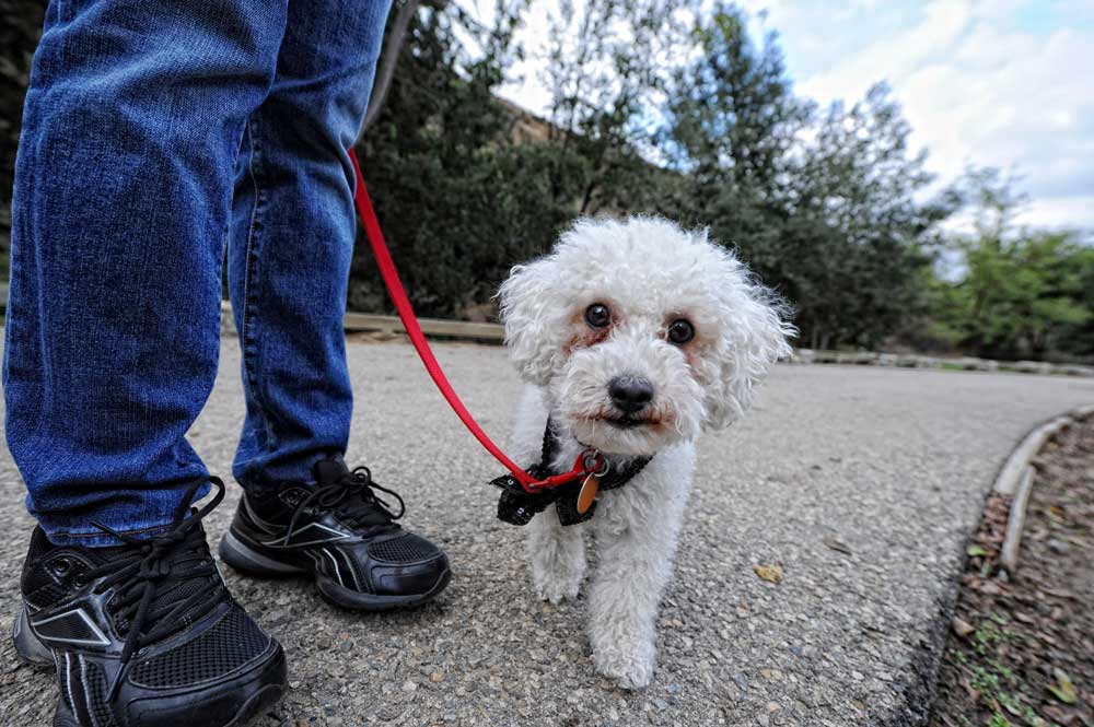 Alma Farias walks her dog Bella through O'Melveny Park in Granada Hills Friday, October 22, 2010.  (Hans Gutknecht/Staff Photographer)
